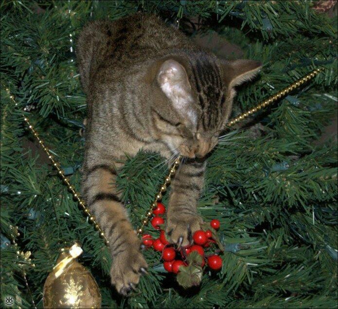 Новогодние котяры 6
