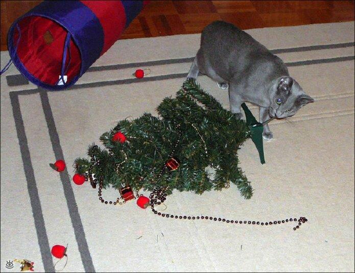 Новогодние котяры 7