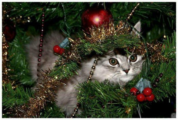 Новогодние котяры 8