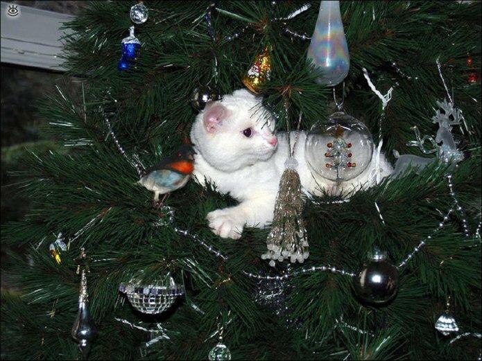 Новогодние котяры 9