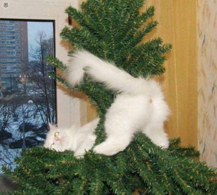 Новогодние котяры 10