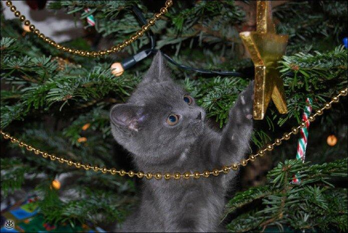 Новогодние котяры 11