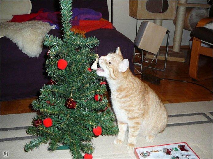 Новогодние котяры 12