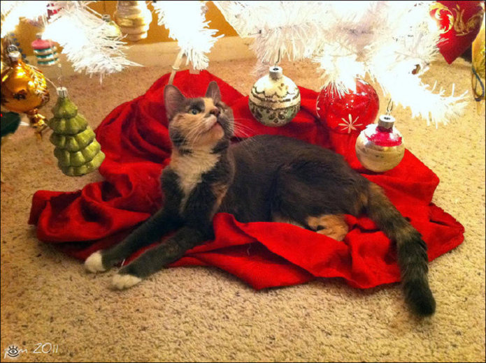 Новогодние котяры 13