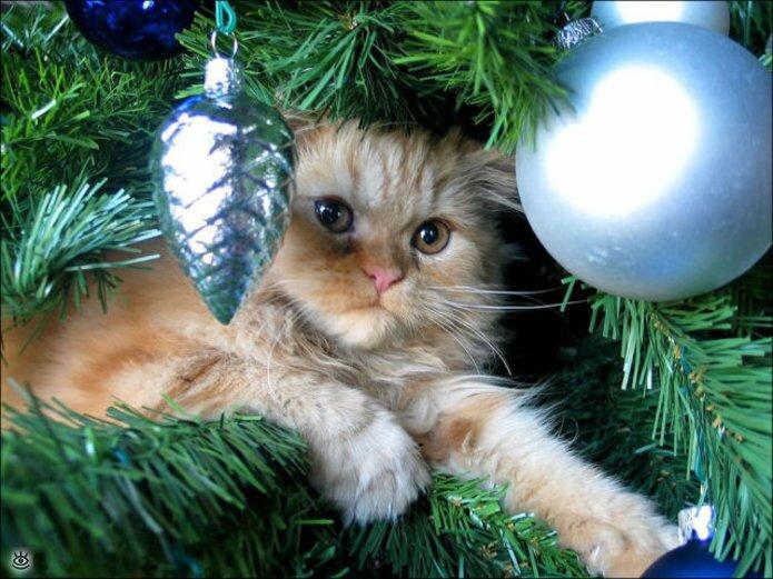 Новогодние котяры 14