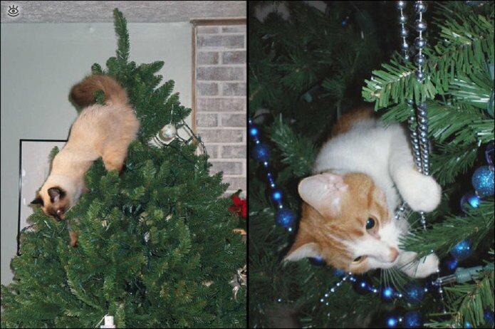Новогодние котяры 15