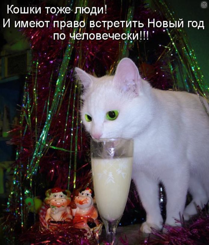 Новогодние котяры 16