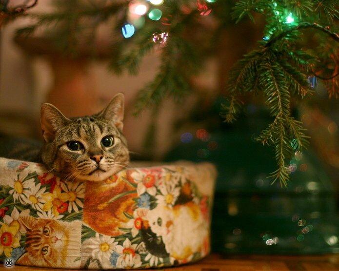 Новогодние котяры 17