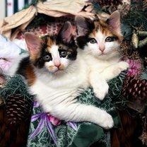 Новогодние котяры