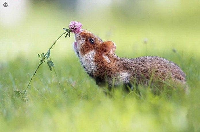 Звери и цветы 2