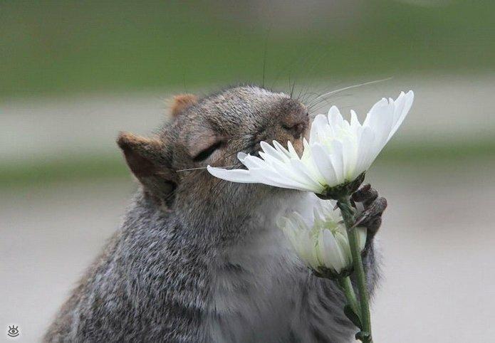 Звери и цветы 4