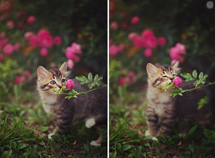 Звери и цветы 5