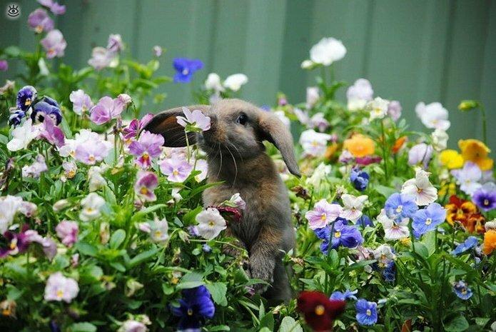 Звери и цветы 8