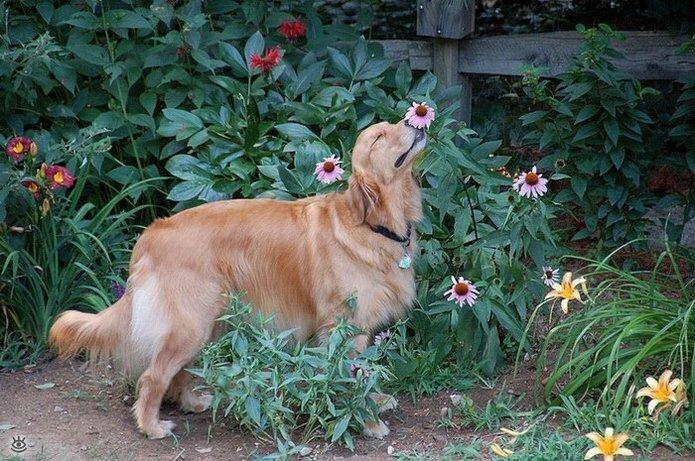 Звери и цветы 10