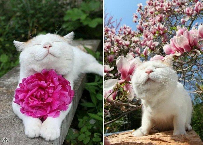 Звери и цветы 17