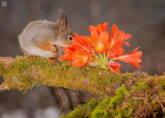 Звери и цветы 18