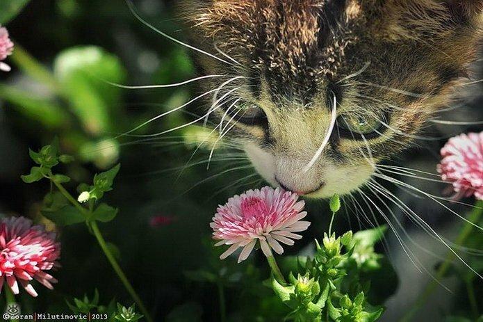 Звери и цветы 19