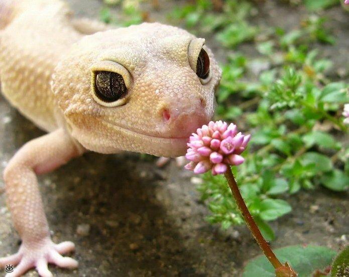Звери и цветы 20