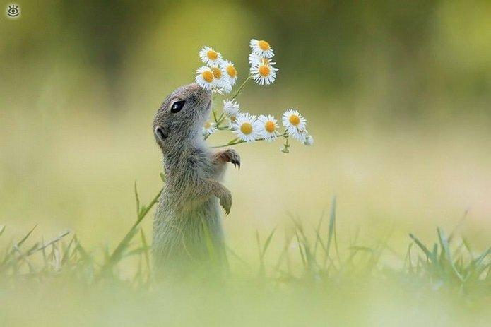 Звери и цветы 21
