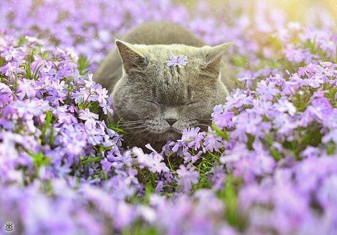 Звери и цветы 22