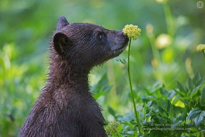 Звери и цветы 24