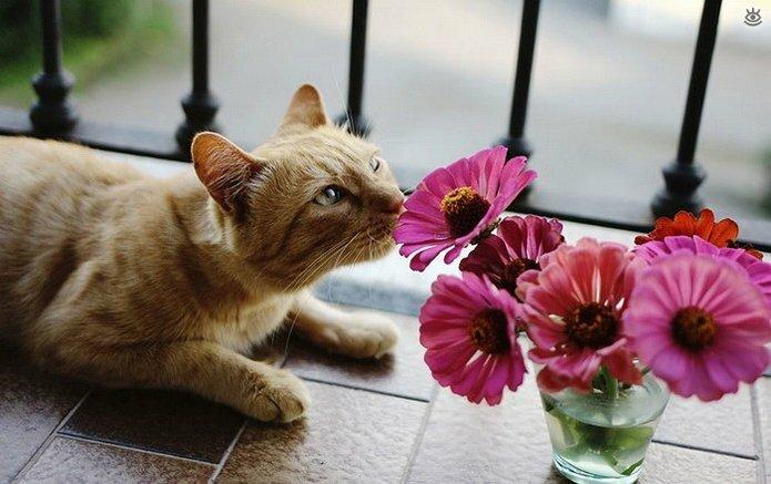 Звери и цветы 25