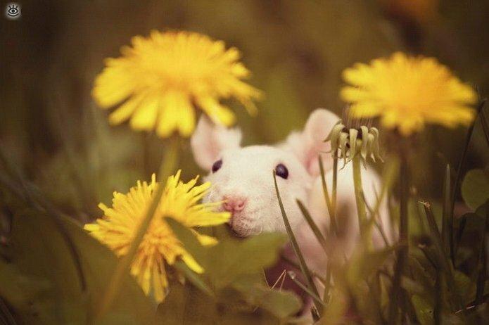 Звери и цветы 28