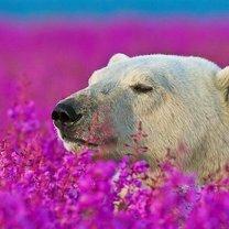 Звери и цветы