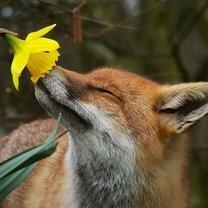 Звери и цветы фото приколы