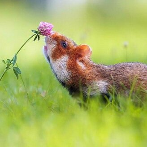 Фото приколы Звери и цветы (30 фото)
