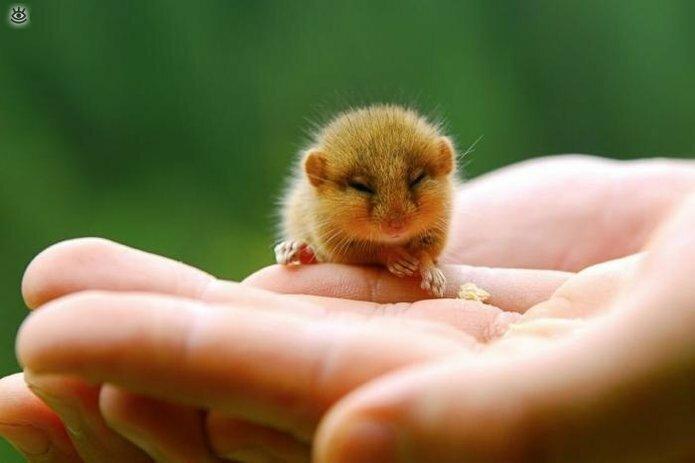 Крохи-малыши животных 0