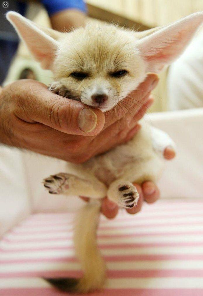 Крохи-малыши животных 5