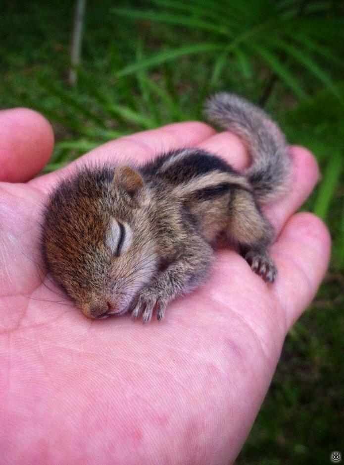 Крохи-малыши животных 12