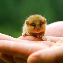 Крохи-малыши животных
