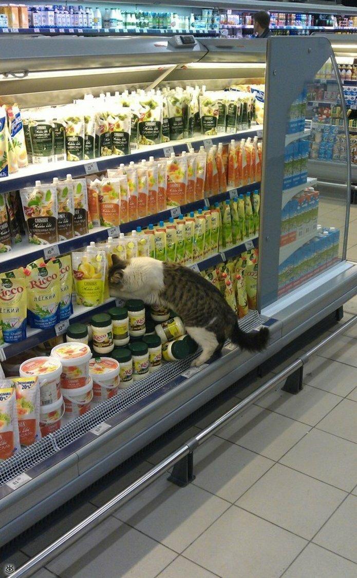 Смешные картинки про супермаркет, картинки