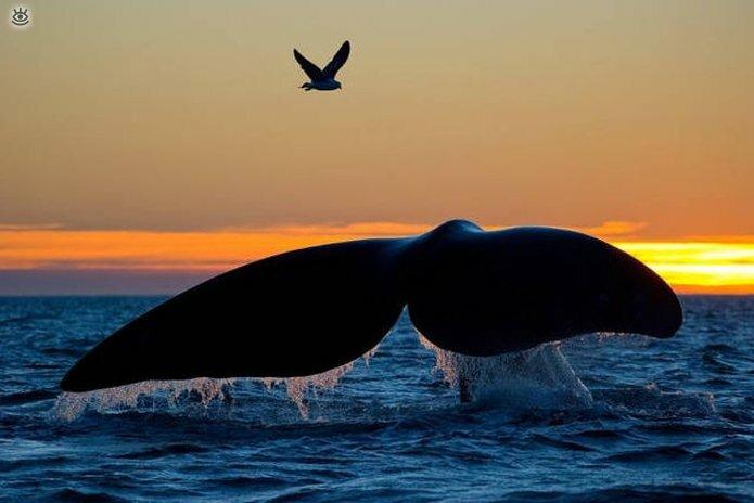Величественные киты 0