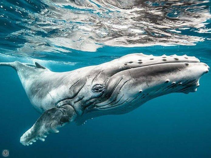 Величественные киты 2