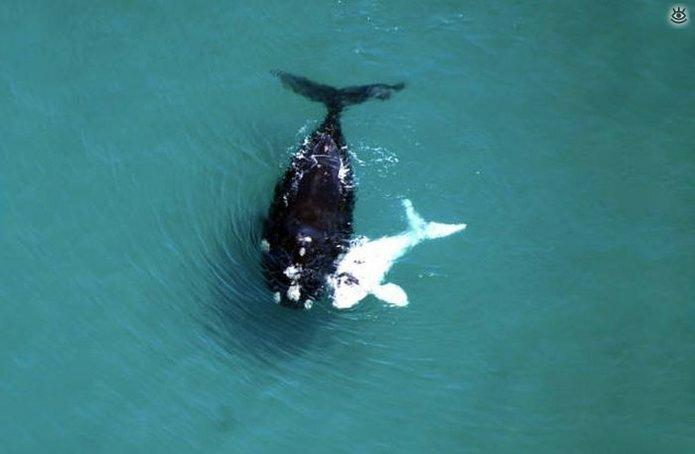 Величественные киты 3