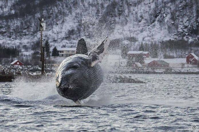 Величественные киты 4