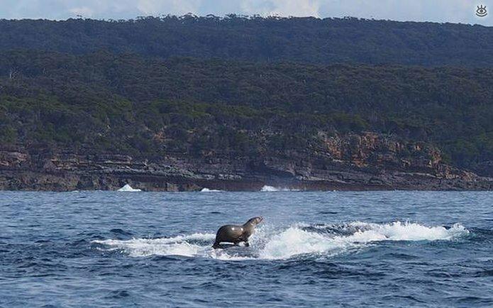 Величественные киты 5