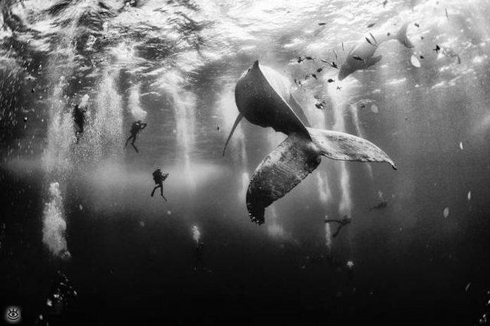 Величественные киты 8