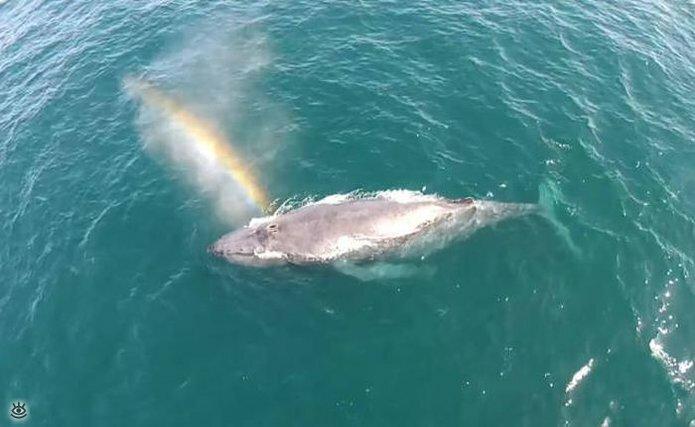 Величественные киты 9
