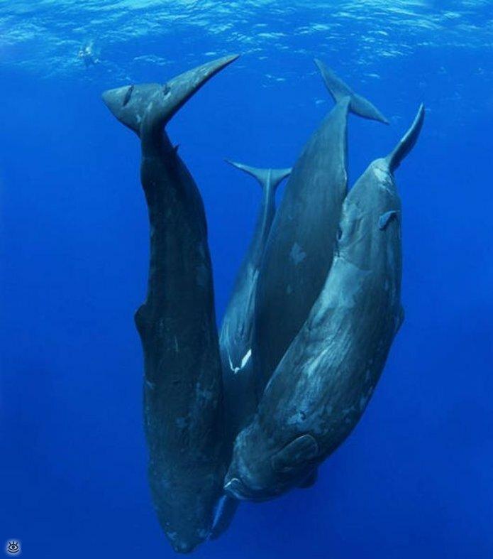 Величественные киты 10