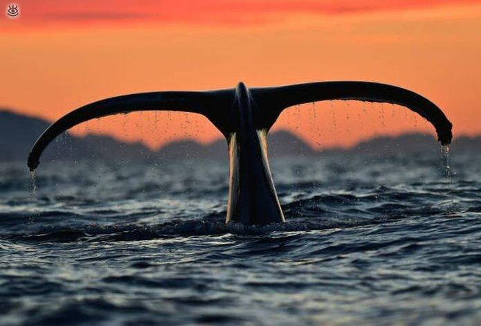 Величественные киты 13