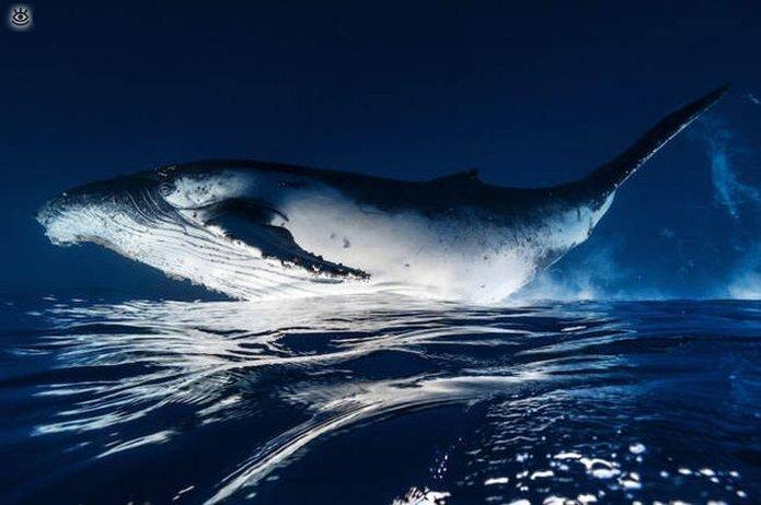 Величественные киты 14