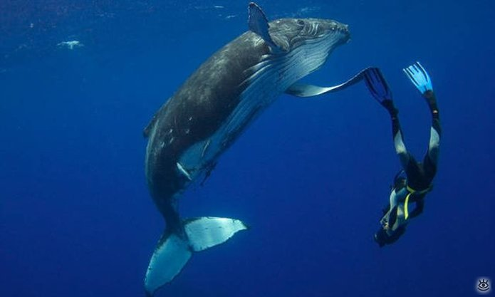 Величественные киты 16
