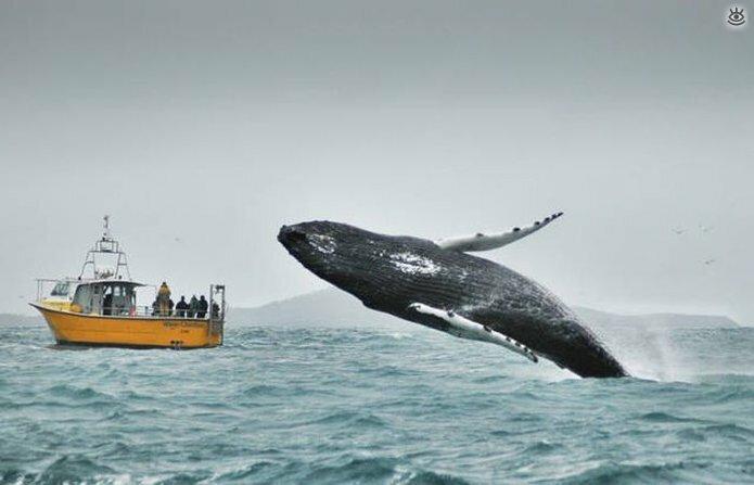 Величественные киты 17