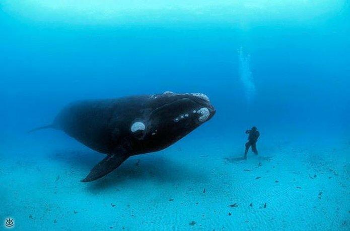 Величественные киты 18