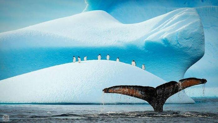 Величественные киты 22