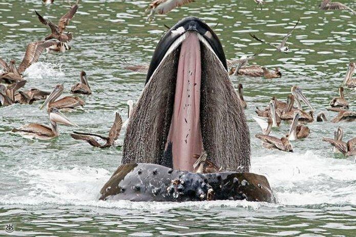 Величественные киты 23